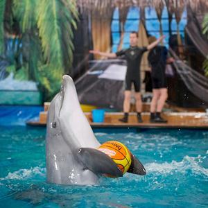 Дельфинарии, океанариумы Волги