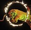Цирки в Волге