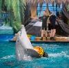 Дельфинарии, океанариумы в Волге